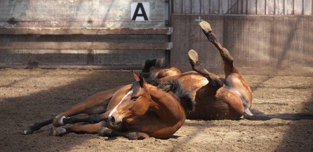 rollende paarden