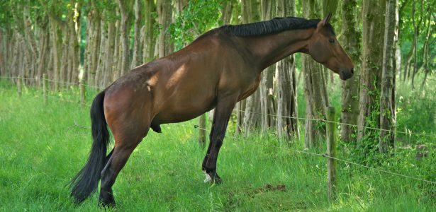 paard in wei