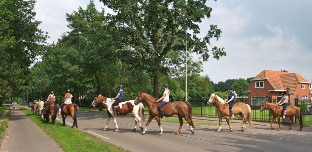 ponykamppaardennaarweibrengen